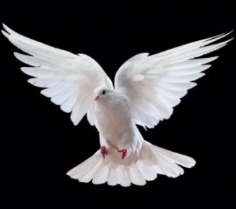Redhill Sinfonia - Dove of Peace