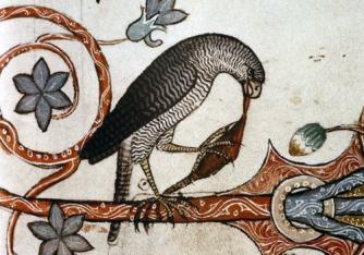 Bird having dinner, Medieval marginalia