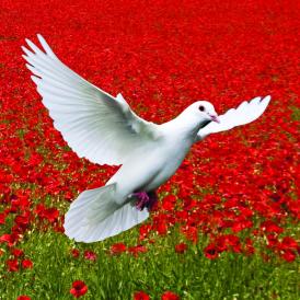 Dove to symbolise peace