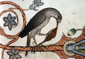 Bird having dinner, Medieval marginalia