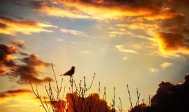 SELO - Sunrise and Birdsong